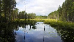Таёжное озеро 2