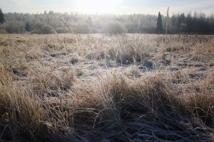 Ноябрьские травы