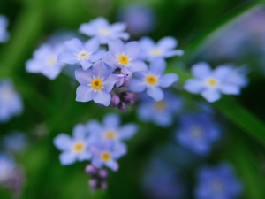 Цветочки, так цветочки