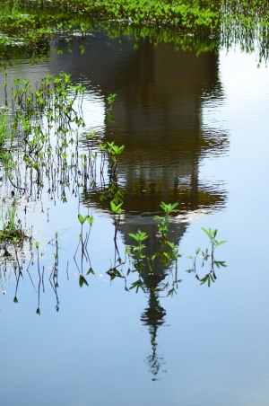 Знакомое отражение