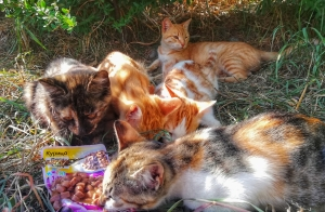 Солнечные котики