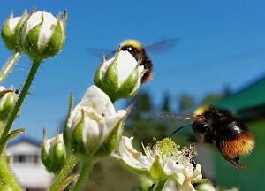 Пчёлкины страсти