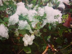 Снежные ягоды