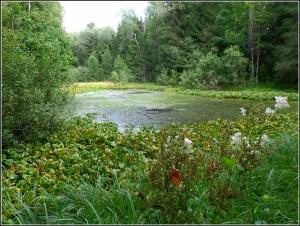Лесной омут