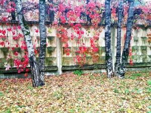 Осень (1)