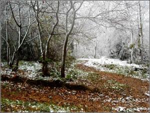 Первый снег на берегах Лесного озера2005-2006 гг.