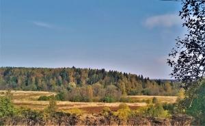 Лес за околицей д. Зубцово