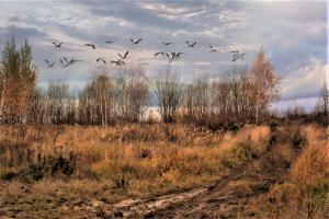 Улетают птицы , улетают...