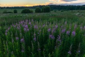 Июльский вечер в полях