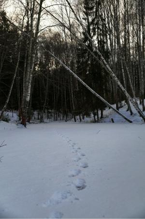 Следы на снегу