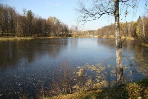 Первый лёд. Средн. Кобушинский пруд. 2009.