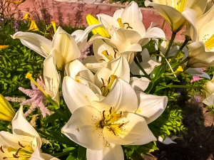 Цветы заморские