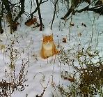В снежной сметане!
