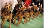 Региональная выставка собак всех пород.
